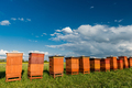 Traditional Wooden Beehives in Fields. Beekeeping and Honey Production. Organic Food Farming - PhotoDune Item for Sale
