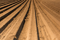 Rows on Plantation. Spring Season in Countryside. Agriculture Industry Background - PhotoDune Item for Sale