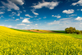 Beautiful Spring Season in Countryside. Canola Fields,Trees and Blue Sky - PhotoDune Item for Sale