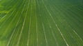 Green Fields at Early Spring Season in Agriculture Farming Industry. Aerial Drone view - PhotoDune Item for Sale