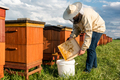Beekeeper or Apiarist Collecting Pollen from Beehive. Healthy Bio Food and Beekeeping. - PhotoDune Item for Sale