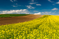 Picturesque Countryside Landscape. Blooming Rapeseed or Canola Fields,Green Rows and Trees - PhotoDune Item for Sale