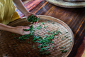 Shot of fresh tea leaves gathered from the plantation  spread on around tray - PhotoDune Item for Sale