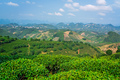Beautiful  shot of a tea plantation  on a sunny day - PhotoDune Item for Sale