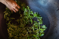 Shot of fresh tea leaves gathered from the plantation   in a big metal bowl - PhotoDune Item for Sale