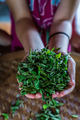 Vertical shot of fresh tea leaves gathered from the plantation - PhotoDune Item for Sale