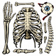 Rib Cage, Arm and Eye and Spine, Anatomy of Human - GraphicRiver Item for Sale