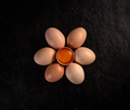 Flat lay of chicken egg - PhotoDune Item for Sale