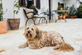 Dog on a terrace - PhotoDune Item for Sale