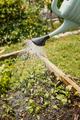 Watering vegetables - PhotoDune Item for Sale