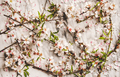 White spring blossom flowers over marble background - PhotoDune Item for Sale