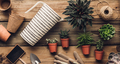 Collection of various succulent plants and garden tools on wooden background - PhotoDune Item for Sale