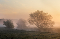 beautiful misty sunrise over trees by river - PhotoDune Item for Sale