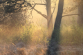 morning warm sunlight in forest - PhotoDune Item for Sale
