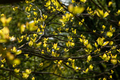 Young leaves on tree branches through which sunlight passes - PhotoDune Item for Sale