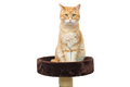 Red, serious cat sitting on scratching posts - PhotoDune Item for Sale