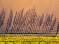 Farming. Shadow of trees. Aerial photography. - PhotoDune Item for Sale