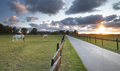 beautiful sunset over meadow with grazing horses - PhotoDune Item for Sale