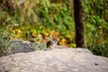 Squirrel portrait on a rock in nature - PhotoDune Item for Sale