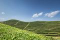 tea garden in sunny spring - PhotoDune Item for Sale