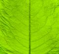Green fresh leaf texture - PhotoDune Item for Sale