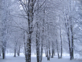 Trees in the snow in a winter park - PhotoDune Item for Sale