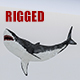 3D Rigged Shark Model - 3DOcean Item for Sale