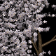 Twenty different types of different tree blossoms - 3DOcean Item for Sale