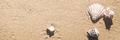 Seashells on sunny tropical beach - PhotoDune Item for Sale