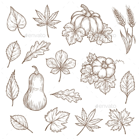 Autumn Leaves and Pumpkins Vector Sketch Icons