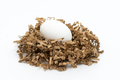 One white chicken eggs on nest isolated on white background - PhotoDune Item for Sale