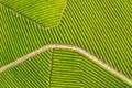 aerial view of tea farm - PhotoDune Item for Sale