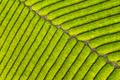 tea farm closeup - PhotoDune Item for Sale