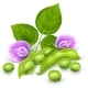 Soy Plant Beans with Green Leaves - GraphicRiver Item for Sale