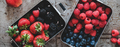 Fresh seasonal berries in lunchboxes over grey background, wide composition - PhotoDune Item for Sale