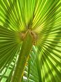 Leaf of palm tree - PhotoDune Item for Sale