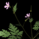 Twenty different types of flowers - 3DOcean Item for Sale