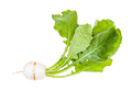 Kokabu japanese white salad turnip with greens - PhotoDune Item for Sale