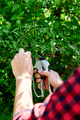 Man hands cuts branches of bushes with hand pruning scissors. - PhotoDune Item for Sale