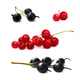 Black and Red Currant - GraphicRiver Item for Sale