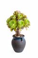 beautiful succulent plant isolated - PhotoDune Item for Sale