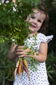 Carrots from small organic farm. Kid farmer hold multi colored carrots in a garden. - PhotoDune Item for Sale