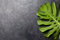 Stone background with green plant leaf - PhotoDune Item for Sale
