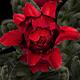 Twenty different flower models - 3DOcean Item for Sale