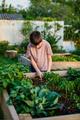 Boy in a vegetable garden - PhotoDune Item for Sale