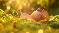 Close-up wildlife of a snail and ladybug in the sunset sunlight. - PhotoDune Item for Sale