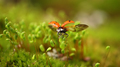 Close-up wildlife of a ladybug in the green grass in the forest - PhotoDune Item for Sale