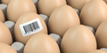 Chicken egg with barcode sticker. Quality control concept. - PhotoDune Item for Sale