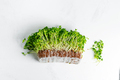 Organic natural microgreen with roots on a light grey marble background - PhotoDune Item for Sale