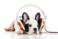 dog listening to music with headphones isolated on white background. - PhotoDune Item for Sale